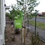 medical landscaping auckland