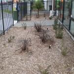 medical landscaping