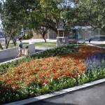 birkenhead_auckland_landscaping_P1010068