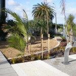 birkenhead_auckland_landscaping_P1010081