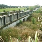 wainoni_park_landscaping_auckland_IMGP1159