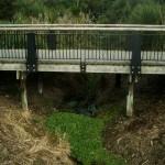 wainoni_park_landscaping_auckland_IMGP1239