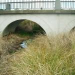 wainoni_park_landscaping_auckland_IMGP1242
